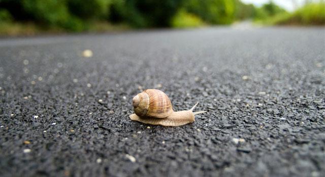ab-blog-image-snail-taking-action
