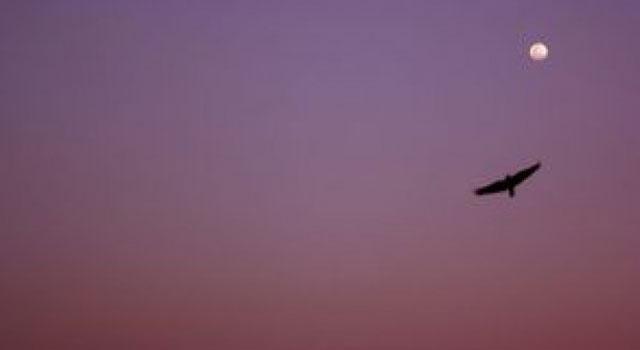 ab-blog-image-dusk